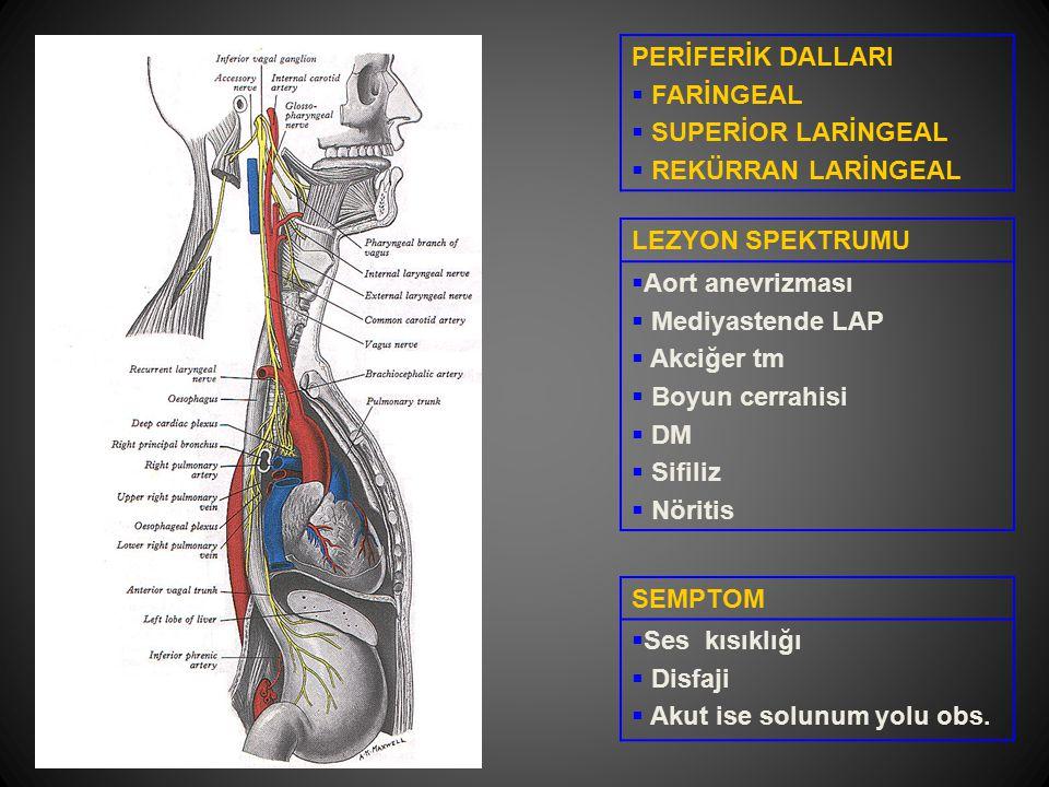 PERİFERİK DALLARI  FARİNGEAL  SUPERİOR LARİNGEAL  REKÜRRAN LARİNGEAL LEZYON SPEKTRUMU  Aort anevrizması  Mediyastende LAP  Akciğer tm  Boyun ce