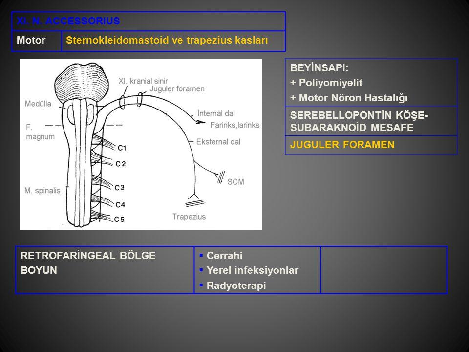 XI. N. ACCESSORIUS MotorSternokleidomastoid ve trapezius kasları BEYİNSAPI: + Poliyomiyelit + Motor Nöron Hastalığı SEREBELLOPONTİN KÖŞE- SUBARAKNOİD