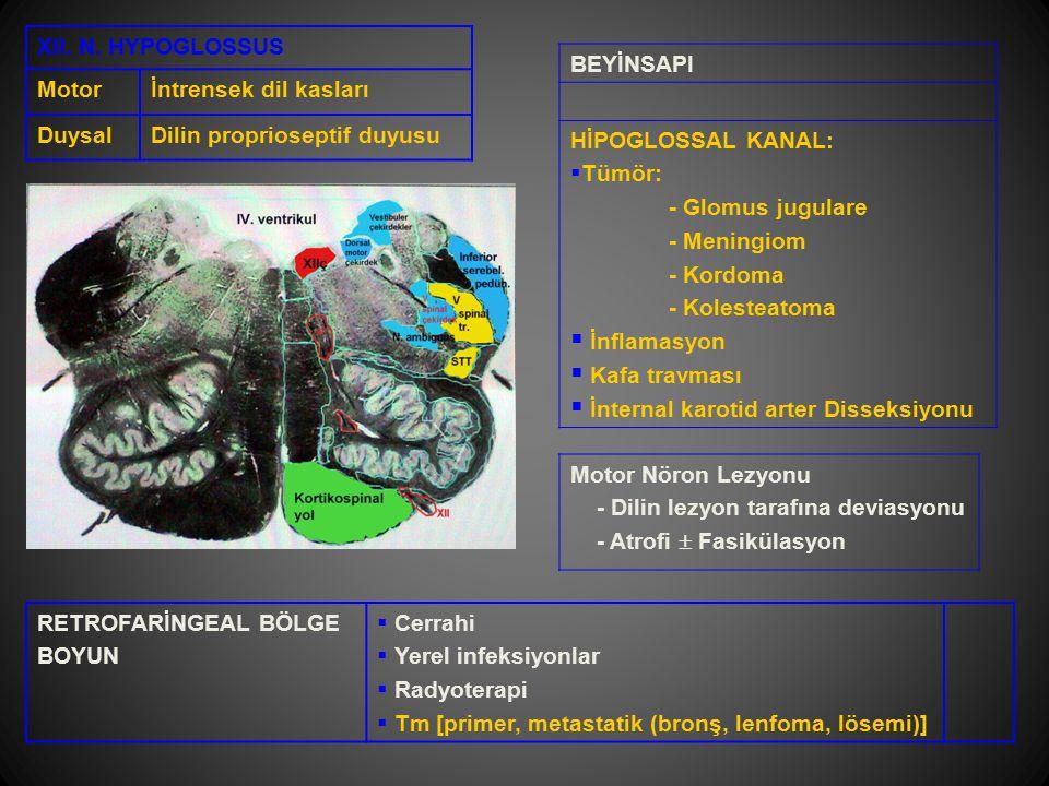 XII. N. HYPOGLOSSUS Motorİntrensek dil kasları DuysalDilin proprioseptif duyusu BEYİNSAPI HİPOGLOSSAL KANAL:  Tümör: - Glomus jugulare - Meningiom -