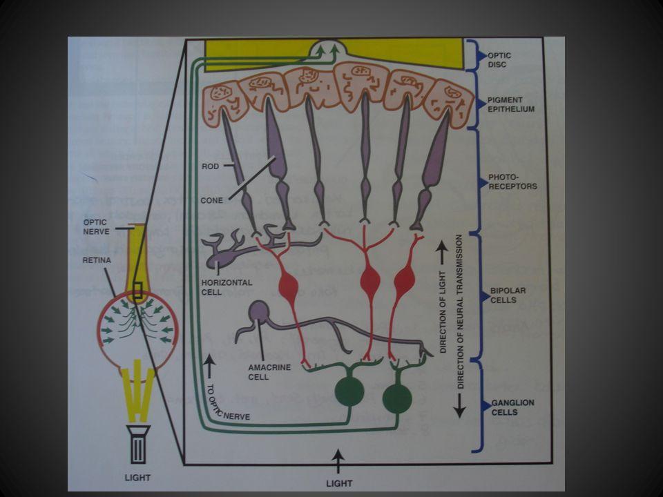 3. Okulomotor sinir