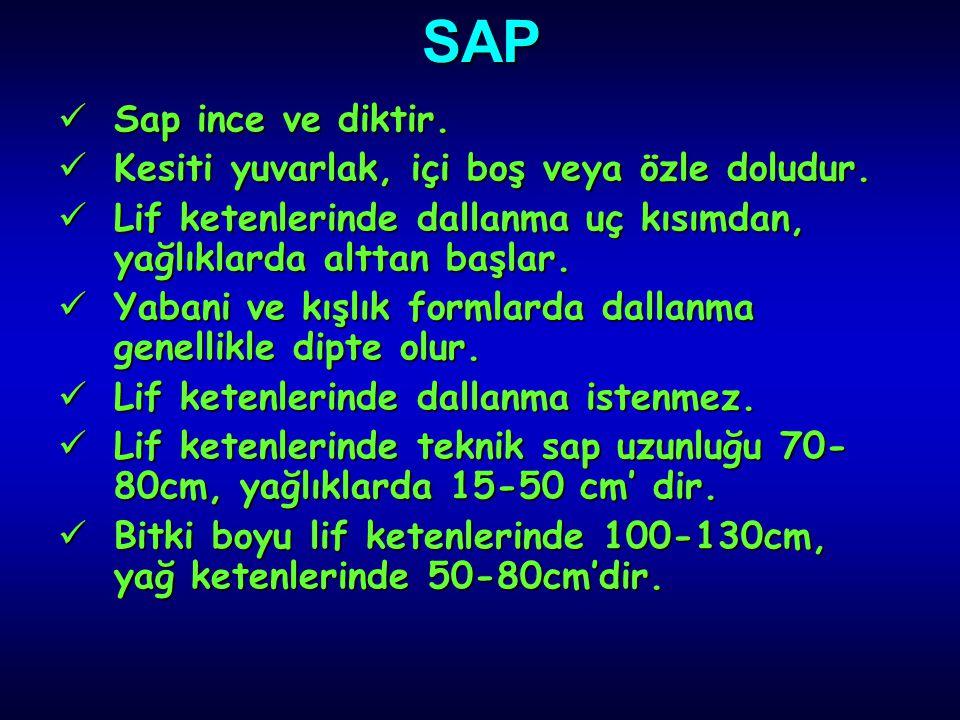 SAP Sap ince ve diktir. Kesiti yuvarlak, içi boş veya özle doludur. Lif ketenlerinde dallanma uç kısımdan, yağlıklarda alttan başlar. Yabani ve kışlık
