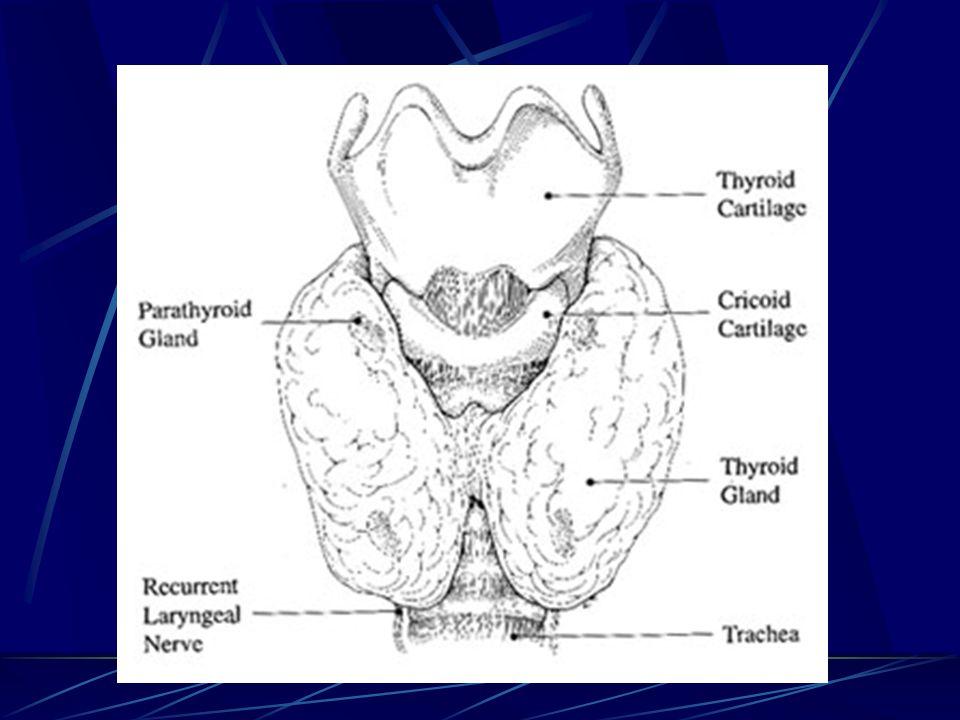 Trakeaya bası daha çok retrosternal guatrlarda görülür.