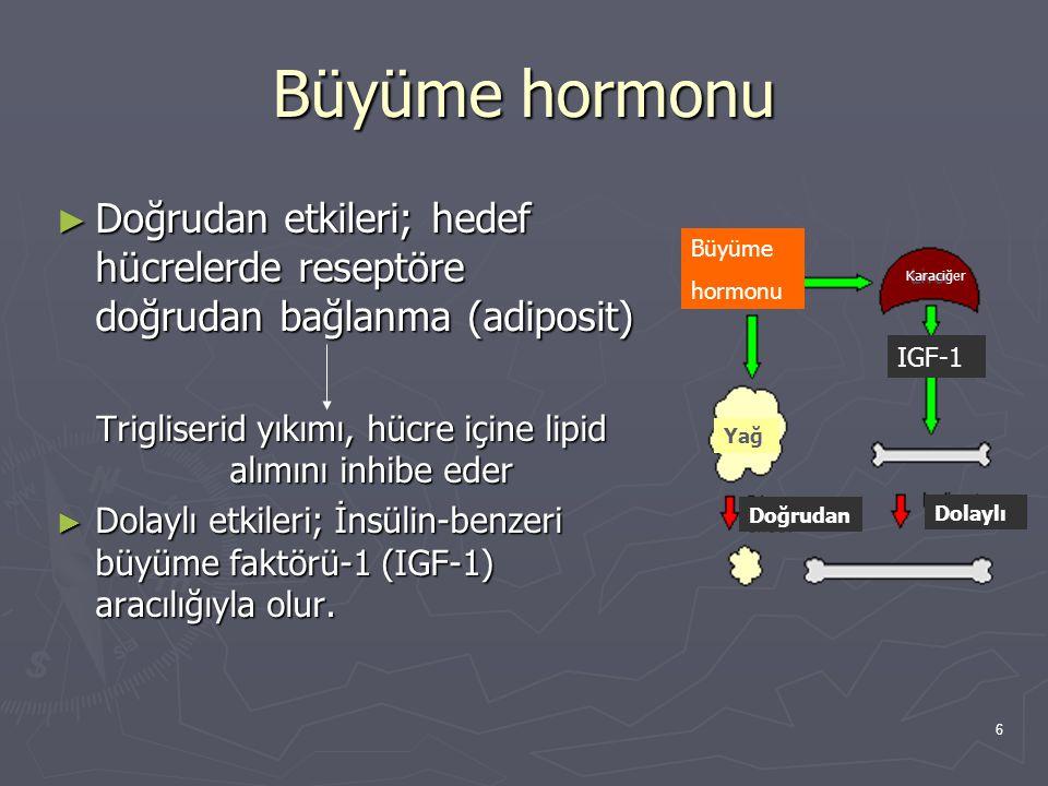 6 Büyüme hormonu ► Doğrudan etkileri; hedef hücrelerde reseptöre doğrudan bağlanma (adiposit) Trigliserid yıkımı, hücre içine lipid alımını inhibe ede