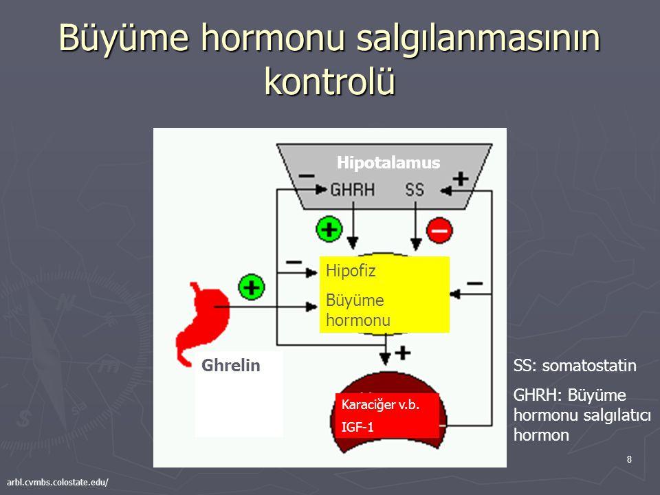 8 Büyüme hormonu salgılanmasının kontrolü Ghrelin Hipotalamus Hipofiz Büyüme hormonu Karaciğer v.b. IGF-1 SS: somatostatin GHRH: Büyüme hormonu salgıl