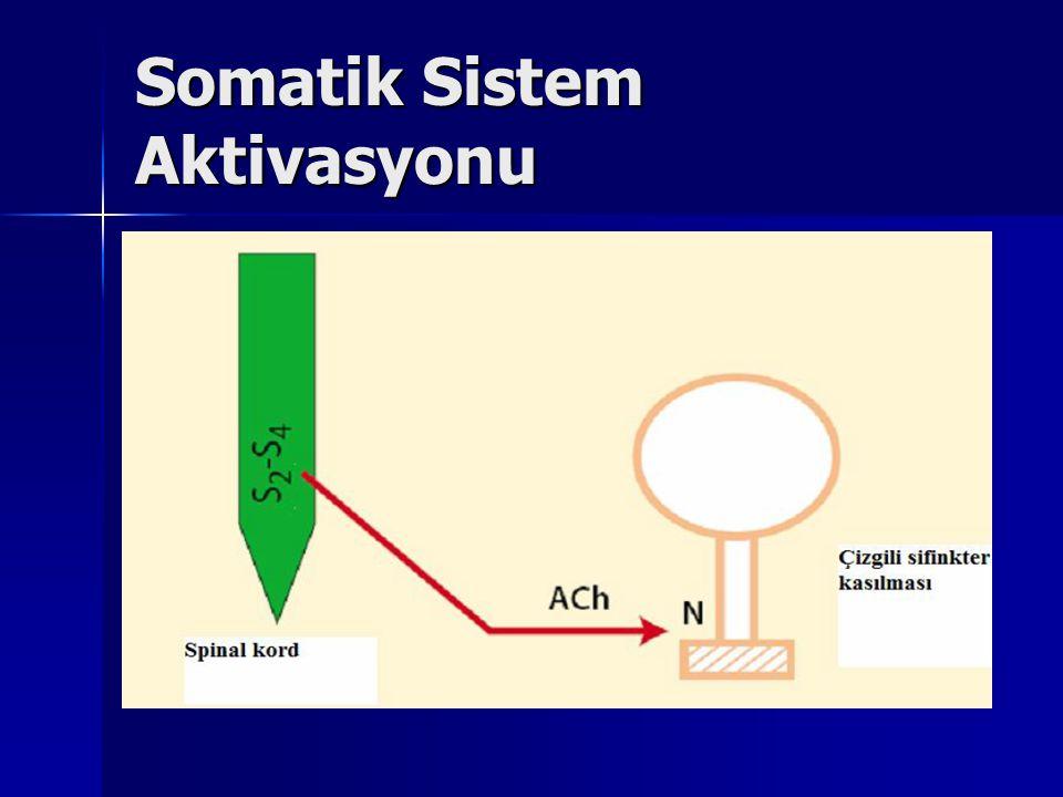 Somatik Sistem Aktivasyonu