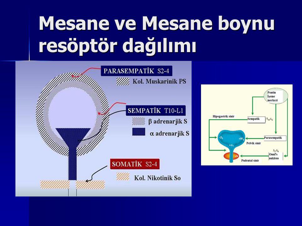Mesane ve Mesane boynu resöptör dağılımı