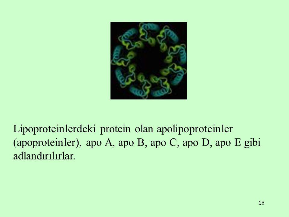 16 Lipoproteinlerdeki protein olan apolipoproteinler (apoproteinler), apo A, apo B, apo C, apo D, apo E gibi adlandırılırlar.