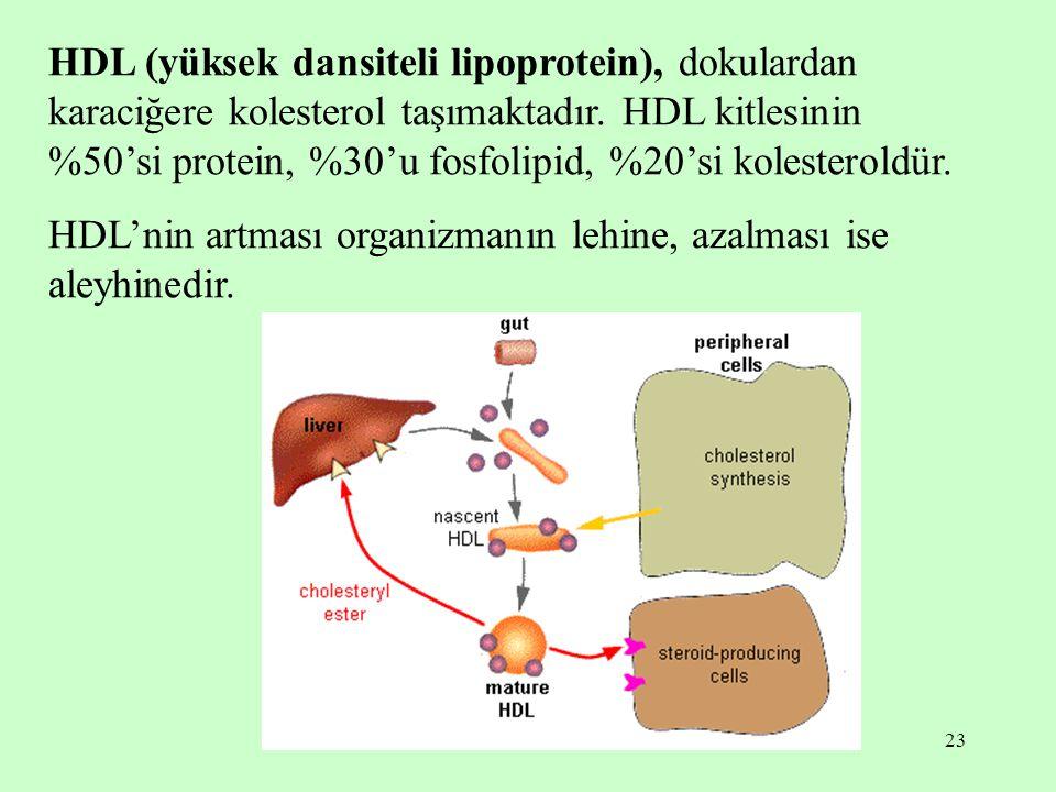 23 HDL (yüksek dansiteli lipoprotein), dokulardan karaciğere kolesterol taşımaktadır. HDL kitlesinin %50'si protein, %30'u fosfolipid, %20'si kolester
