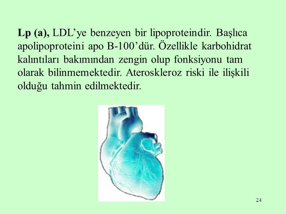 24 Lp (a), LDL'ye benzeyen bir lipoproteindir. Başlıca apolipoproteini apo B-100'dür. Özellikle karbohidrat kalıntıları bakımından zengin olup fonksiy