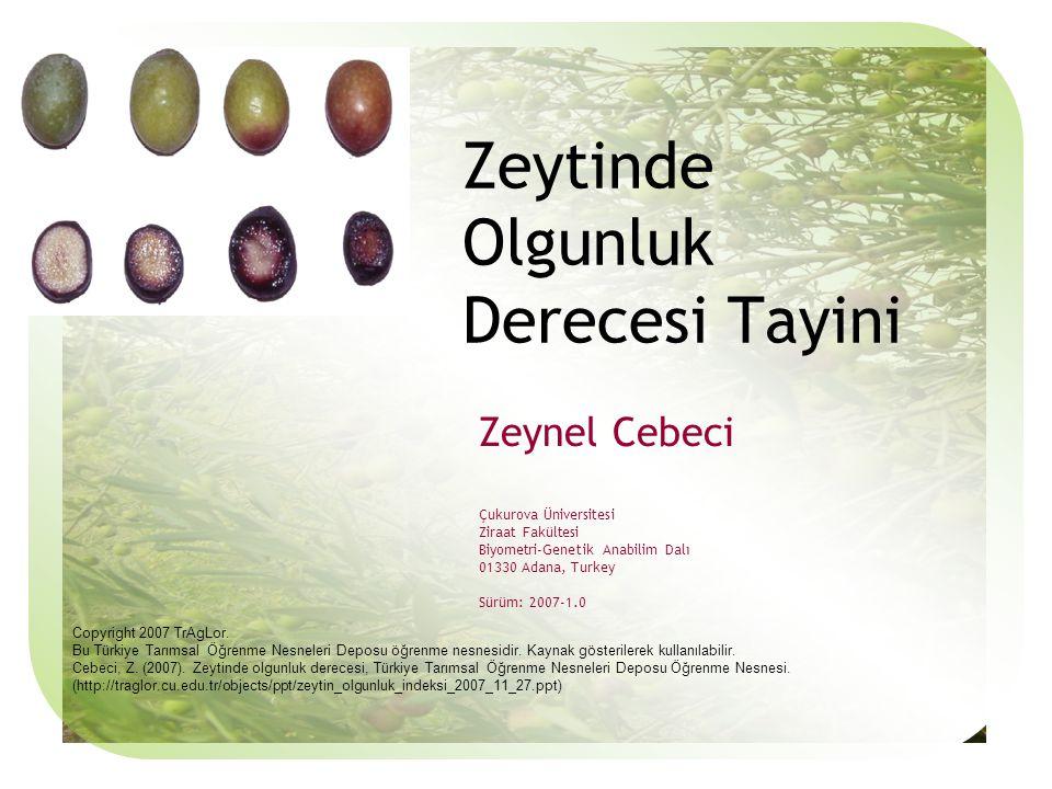 Zeynel Cebeci Çukurova Üniversitesi Ziraat Fakültesi Biyometri-Genetik Anabilim Dalı 01330 Adana, Turkey Sürüm: 2007-1.0 Zeytinde Olgunluk Derecesi Tayini Copyright 2007 TrAgLor.