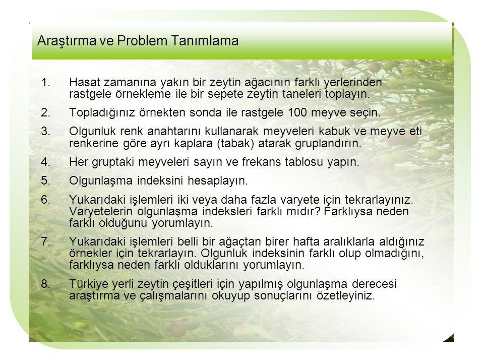 Araştırma ve Problem Tanımlama 1.Hasat zamanına yakın bir zeytin ağacının farklı yerlerinden rastgele örnekleme ile bir sepete zeytin taneleri toplayın.
