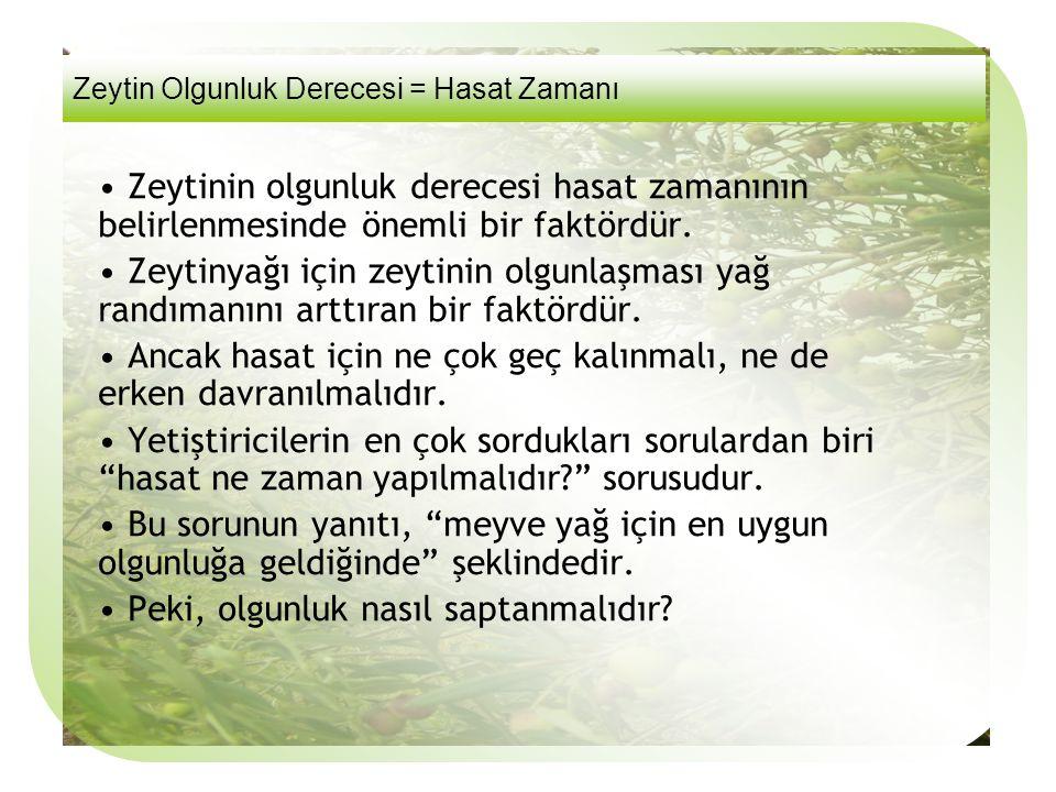 Sorular 3. Yanda görülen zeytin Meyvesinin olgunluk puanı nedir? a)4 b)5 c)6 d)7