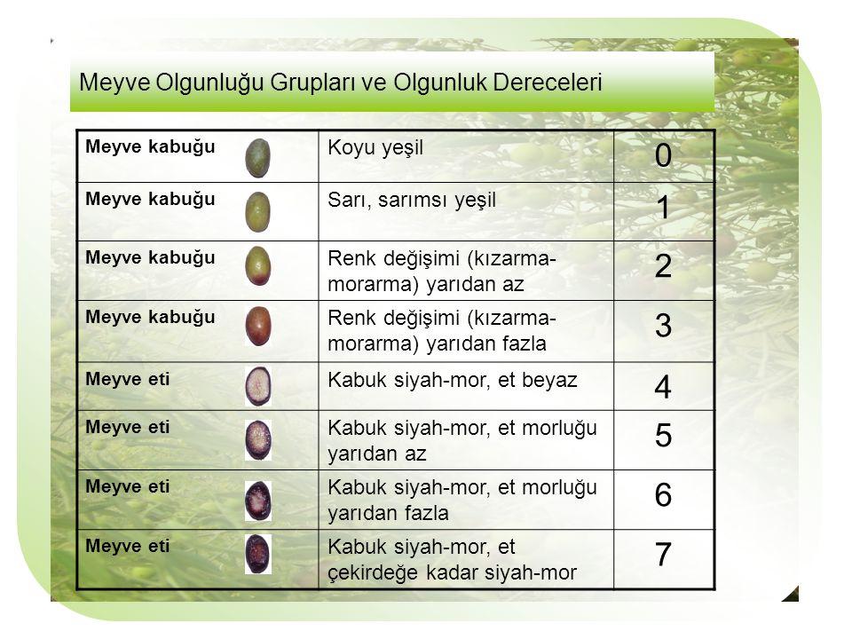 Meyve Olgunluğu Grupları ve Olgunluk Dereceleri Meyve kabuğu Koyu yeşil 0 Meyve kabuğu Sarı, sarımsı yeşil 1 Meyve kabuğu Renk değişimi (kızarma- morarma) yarıdan az 2 Meyve kabuğu Renk değişimi (kızarma- morarma) yarıdan fazla 3 Meyve eti Kabuk siyah-mor, et beyaz 4 Meyve eti Kabuk siyah-mor, et morluğu yarıdan az 5 Meyve eti Kabuk siyah-mor, et morluğu yarıdan fazla 6 Meyve eti Kabuk siyah-mor, et çekirdeğe kadar siyah-mor 7