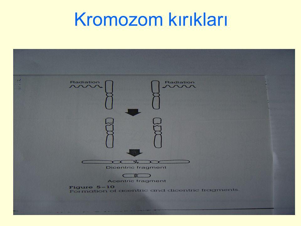 46 Kromozom kırıkları
