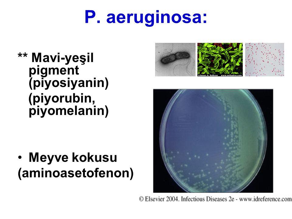 P. aeruginosa: ** Mavi-yeşil pigment (piyosiyanin) (piyorubin, piyomelanin) Meyve kokusu (aminoasetofenon)
