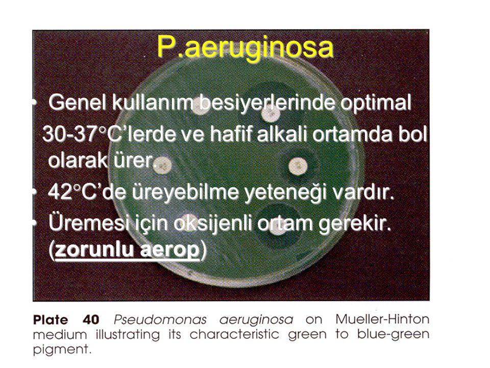 P.aeruginosa Genel kullanım besiyerlerinde optimalGenel kullanım besiyerlerinde optimal 30-37  C'lerde ve hafif alkali ortamda bol olarak ürer. 30-37