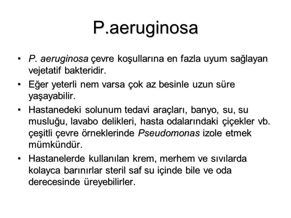 P.aeruginosa P. aeruginosa çevre koşullarına en fazla uyum sağlayan vejetatif bakteridir.P. aeruginosa çevre koşullarına en fazla uyum sağlayan vejeta