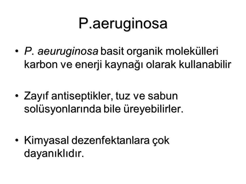 P.aeruginosa P. aeuruginosa basit organik molekülleri karbon ve enerji kaynağı olarak kullanabilirP. aeuruginosa basit organik molekülleri karbon ve e