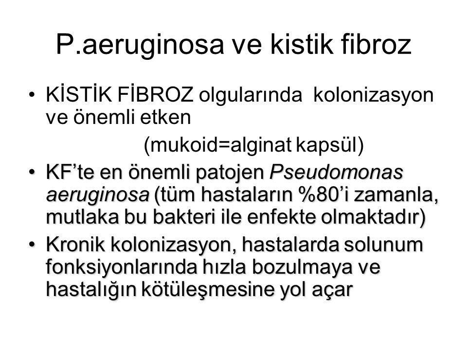 P.aeruginosa ve kistik fibroz KİSTİK FİBROZ olgularında kolonizasyon ve önemli etken (mukoid=alginat kapsül) KF'te en önemli patojen Pseudomonas aerug