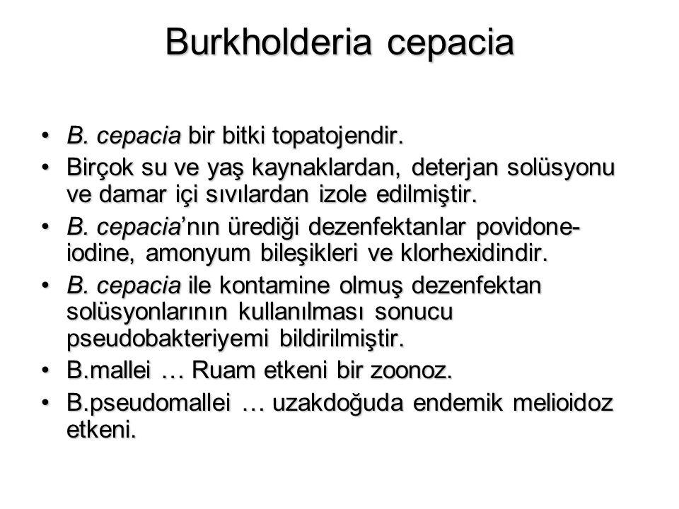 Burkholderia cepacia B. cepacia bir bitki topatojendir.B. cepacia bir bitki topatojendir. Birçok su ve yaş kaynaklardan, deterjan solüsyonu ve damar i