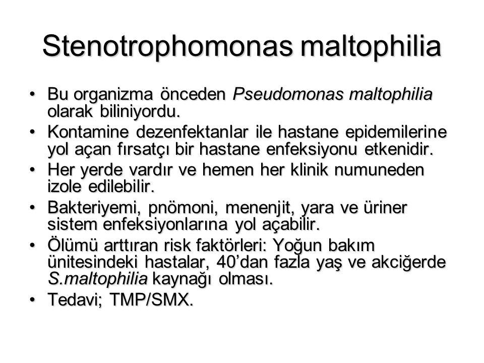 Stenotrophomonas maltophilia Bu organizma önceden Pseudomonas maltophilia olarak biliniyordu.Bu organizma önceden Pseudomonas maltophilia olarak bilin