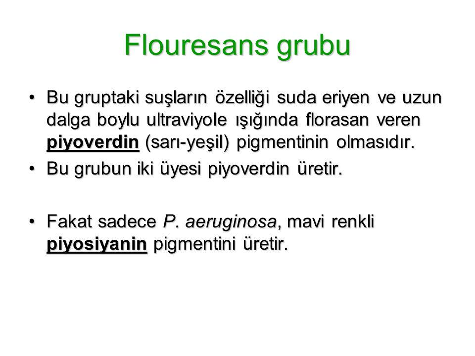 Flouresans grubu Bu gruptaki suşların özelliği suda eriyen ve uzun dalga boylu ultraviyole ışığında florasan veren piyoverdin (sarı-yeşil) pigmentinin