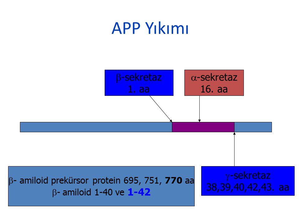APP Yıkımı  -sekretaz 1. aa  -sekretaz 16. aa  -sekretaz 38,39,40,42,43. aa  - amiloid prekürsor protein 695, 751, 770 aa  -  amiloid 1-40 ve 1-