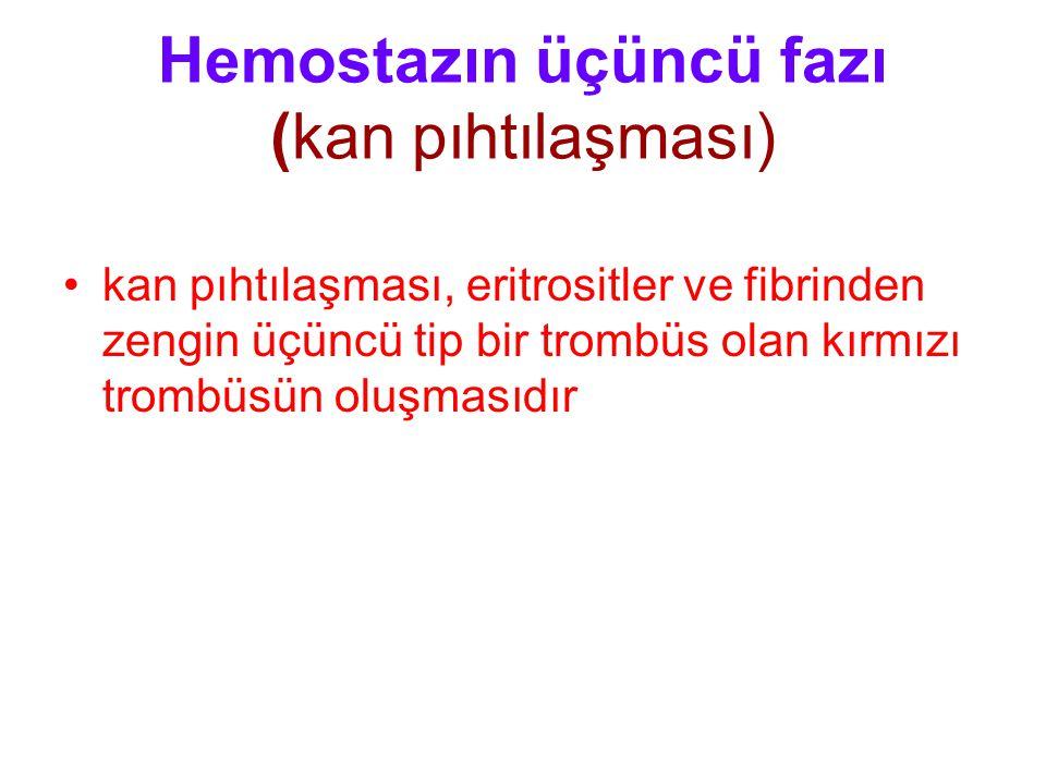 Hemostazın üçüncü fazı (kan pıhtılaşması) kan pıhtılaşması, eritrositler ve fibrinden zengin üçüncü tip bir trombüs olan kırmızı trombüsün oluşmasıdır