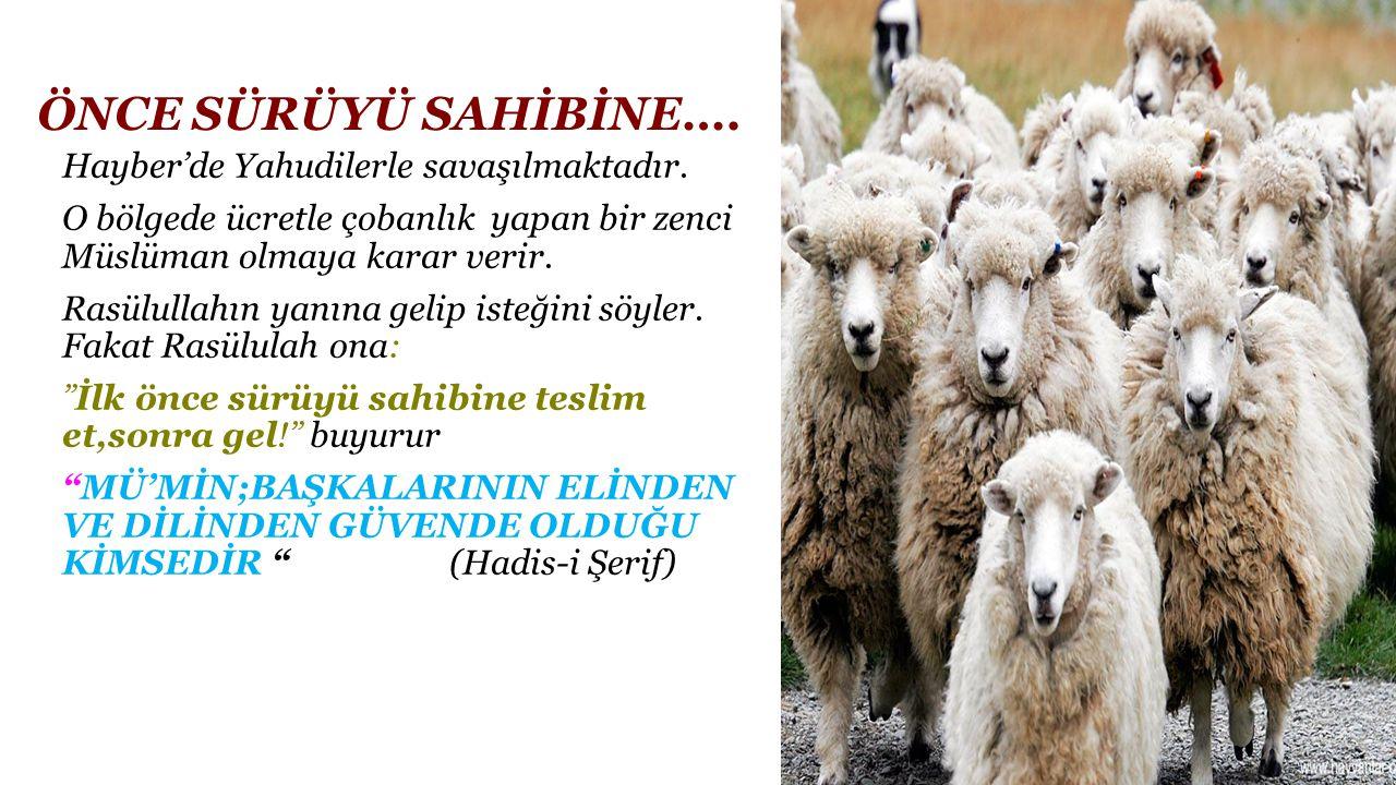ÖNCE SÜRÜYÜ SAHİBİNE…. Hayber'de Yahudilerle savaşılmaktadır. O bölgede ücretle çobanlık yapan bir zenci Müslüman olmaya karar verir. Rasülullahın yan