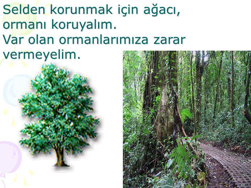 Selden korunmak için ağacı, ormanı koruyalım. Var olan ormanlarımıza zarar vermeyelim.