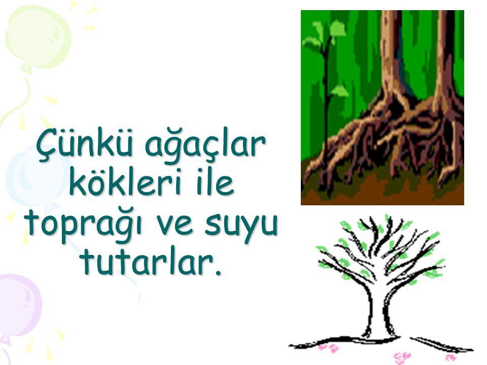 Çünkü ağaçlar kökleri ile toprağı ve suyu tutarlar.