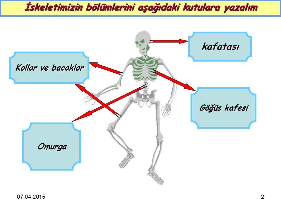 2 İskeletimizin bölümlerini aşağıdaki kutulara yazalım kafatası Göğüs kafesi Omurga Kollar ve bacaklar