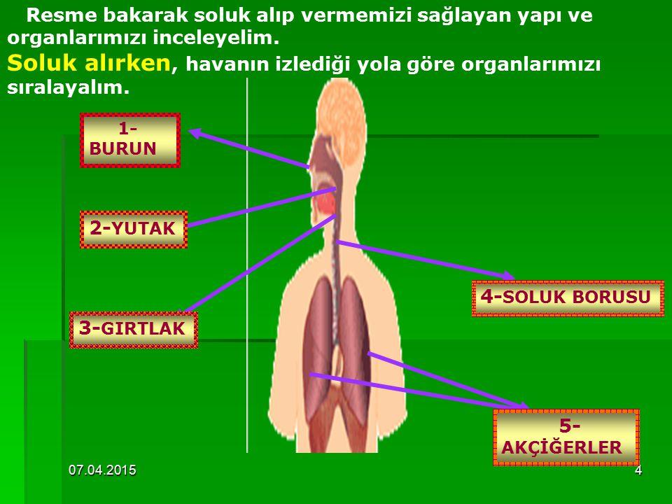 07.04.20154 Resme bakarak soluk alıp vermemizi sağlayan yapı ve organlarımızı inceleyelim.