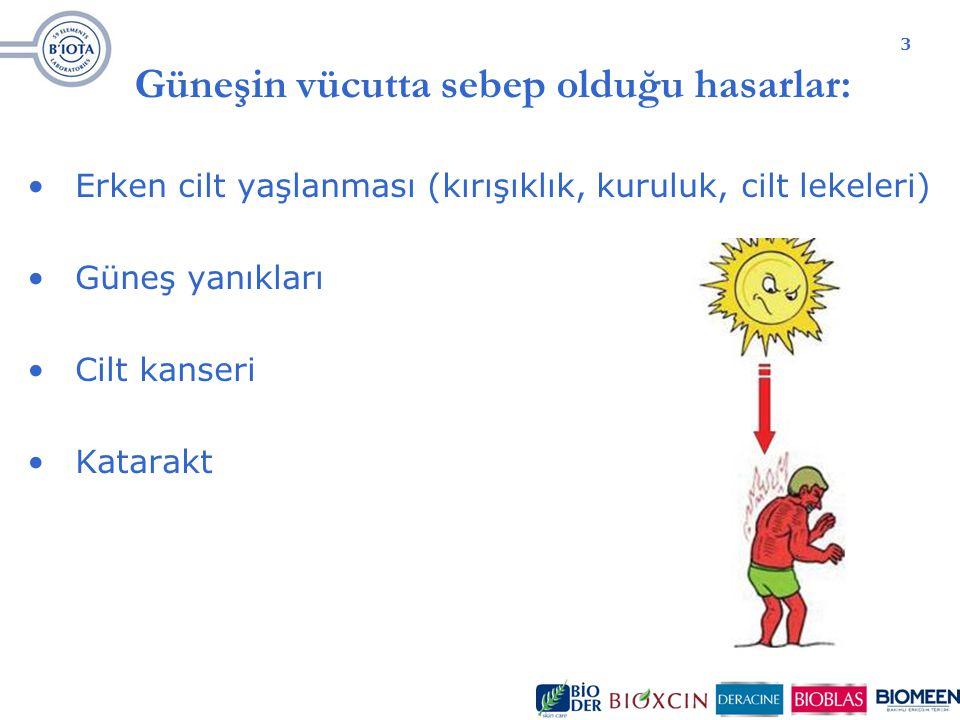 3 Güneşin vücutta sebep olduğu hasarlar: Erken cilt yaşlanması (kırışıklık, kuruluk, cilt lekeleri) Güneş yanıkları Cilt kanseri Katarakt