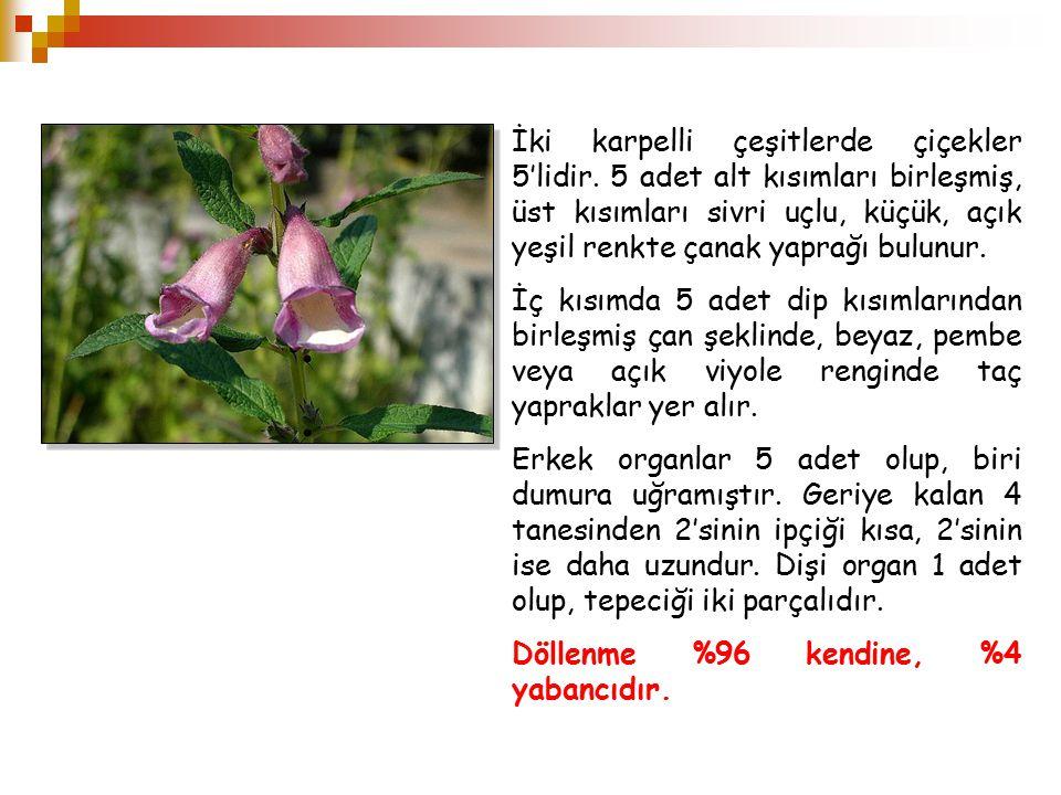 MeyveMeyve Susam meyvesine Kapsül adı verilir.Kapsül, iki ya da dört karpellidir.
