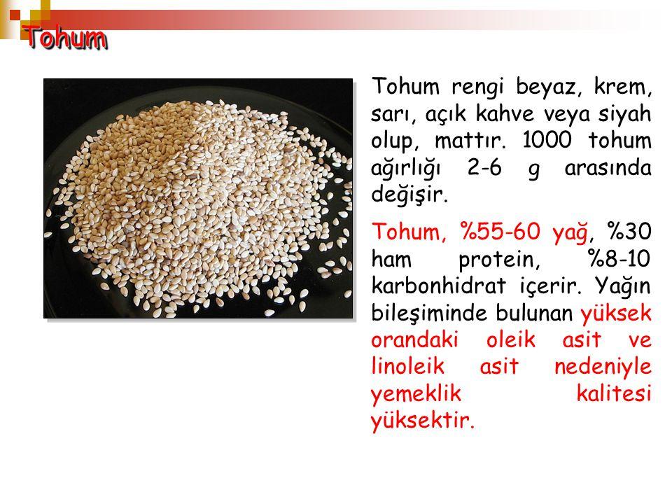 TohumTohum Tohum rengi beyaz, krem, sarı, açık kahve veya siyah olup, mattır. 1000 tohum ağırlığı 2-6 g arasında değişir. Tohum, %55-60 yağ, %30 ham p