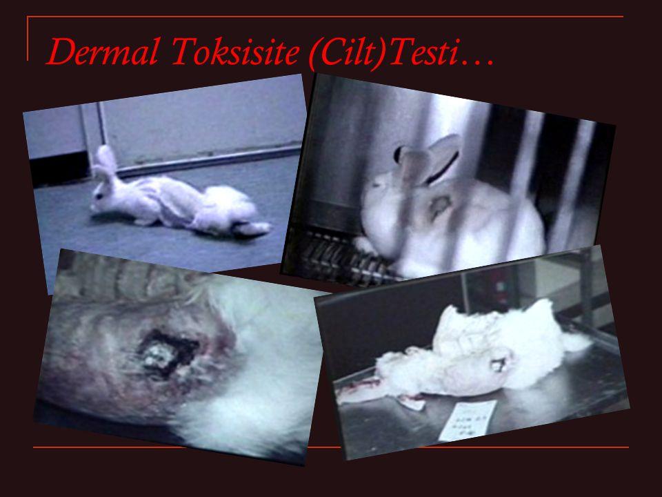 Dermal Toksisite (Cilt)Testi…