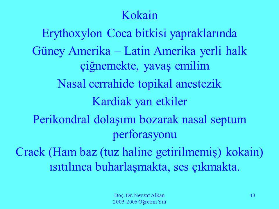 Doç. Dr. Nevzat Alkan 2005-2006 Öğretim Yılı 43 Kokain Erythoxylon Coca bitkisi yapraklarında Güney Amerika – Latin Amerika yerli halk çiğnemekte, yav