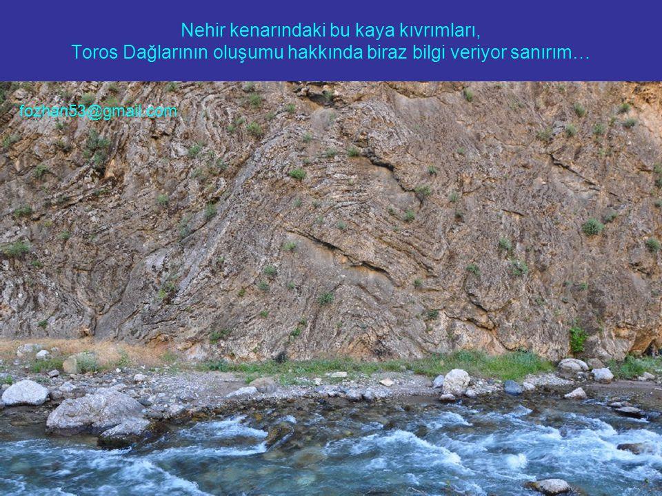 Nehir kenarındaki bu kaya kıvrımları, Toros Dağlarının oluşumu hakkında biraz bilgi veriyor sanırım… fozhan53@gmail.com