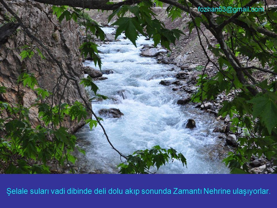 Şelale suları vadi dibinde deli dolu akıp sonunda Zamantı Nehrine ulaşıyorlar. fozhan53@gmail.com