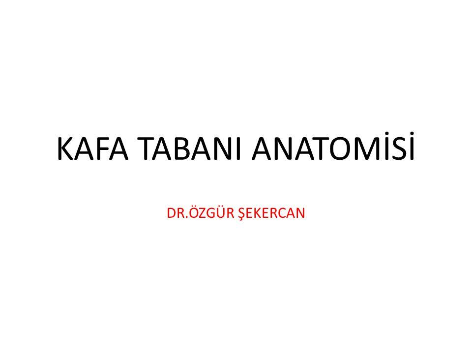 KAFA TABANI ANATOMİSİ DR.ÖZGÜR ŞEKERCAN
