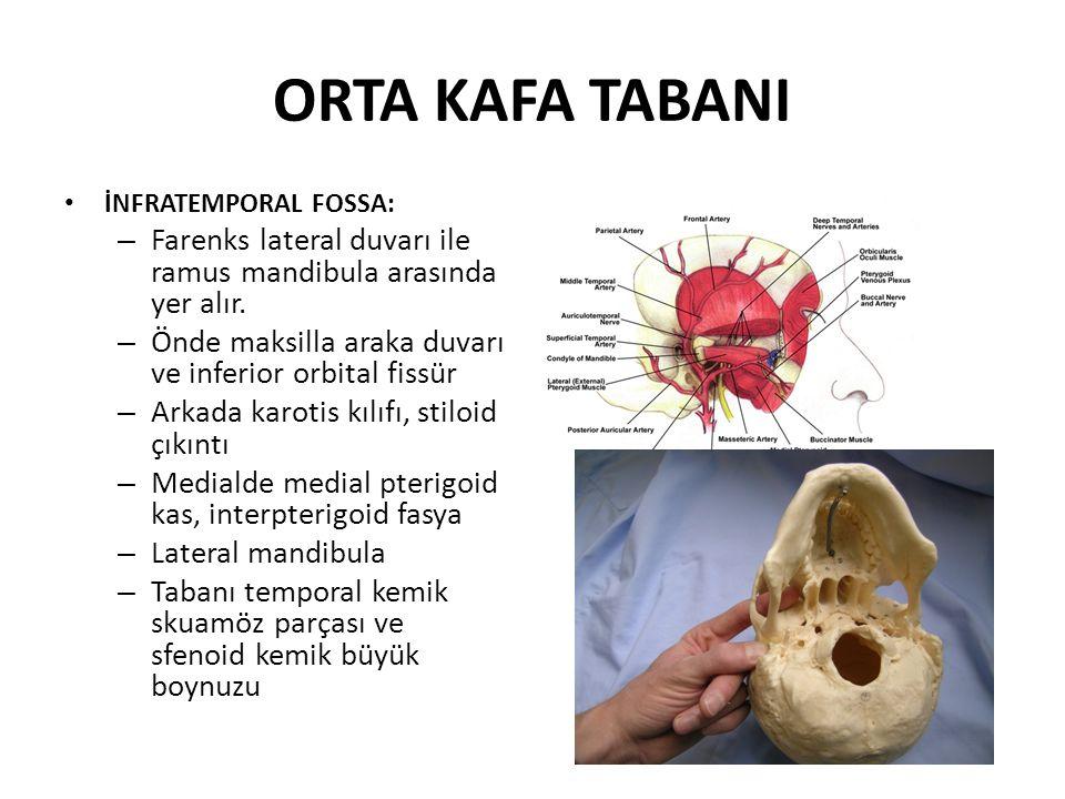 ORTA KAFA TABANI İNFRATEMPORAL FOSSA: – Farenks lateral duvarı ile ramus mandibula arasında yer alır.
