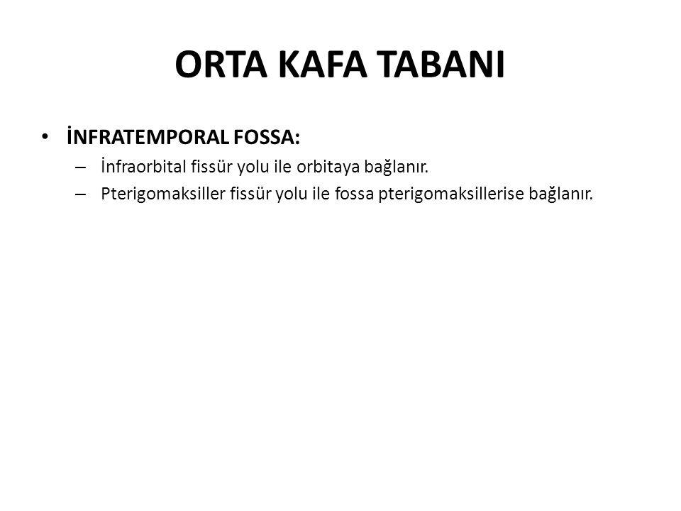 ORTA KAFA TABANI İNFRATEMPORAL FOSSA: – İnfraorbital fissür yolu ile orbitaya bağlanır.