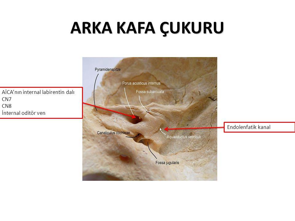 ARKA KAFA ÇUKURU AİCA'nın internal labirentin dalı CN7 CN8 İnternal oditör ven Endolenfatik kanal