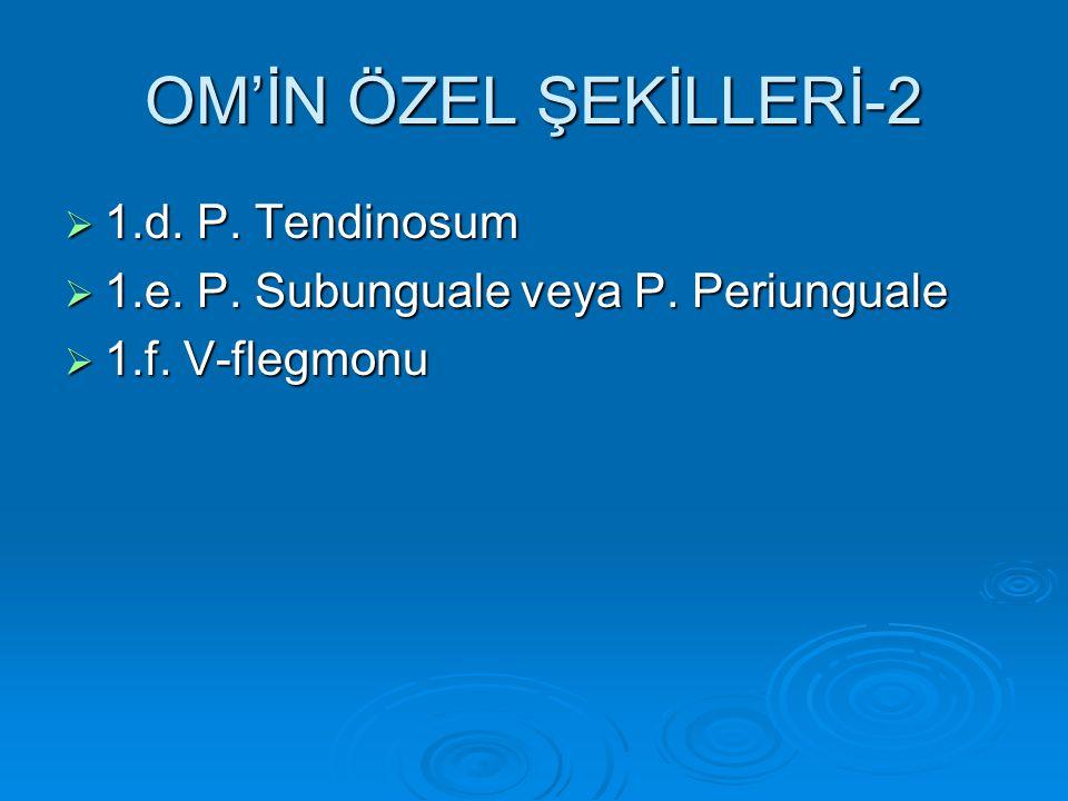 OM'İN ÖZEL ŞEKİLLERİ-2  1.d.P. Tendinosum  1.e.