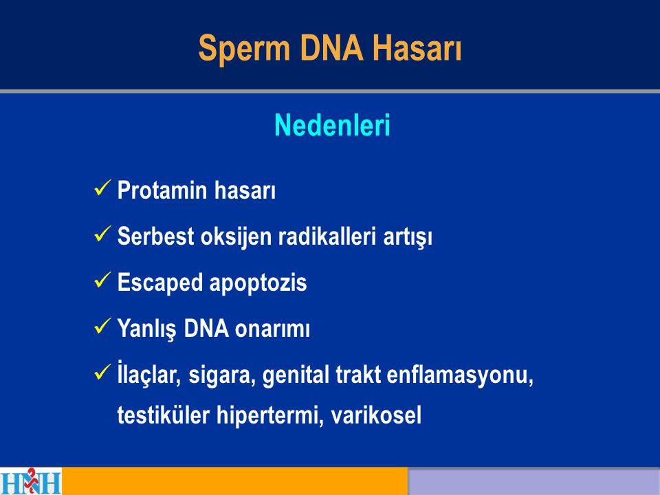 Sperm DNA Hasarı Protamin hasarı Serbest oksijen radikalleri artışı Escaped apoptozis Yanlış DNA onarımı İlaçlar, sigara, genital trakt enflamasyonu,