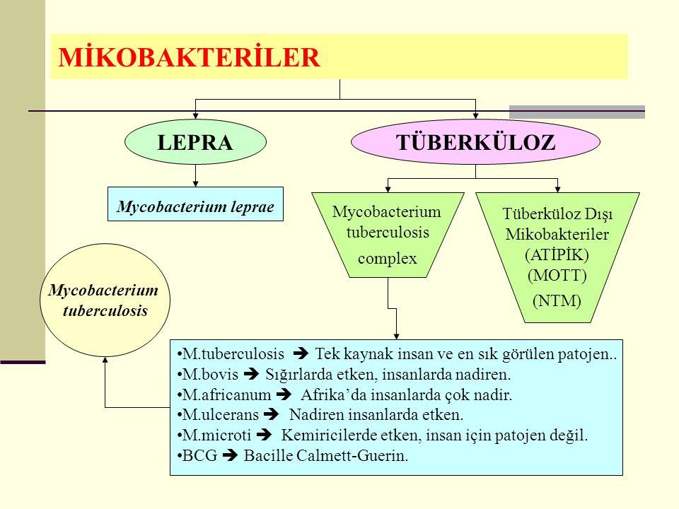 MİKOBAKTERİLER Mycobacterium leprae LEPRATÜBERKÜLOZ M.tuberculosis  Tek kaynak insan ve en sık görülen patojen..
