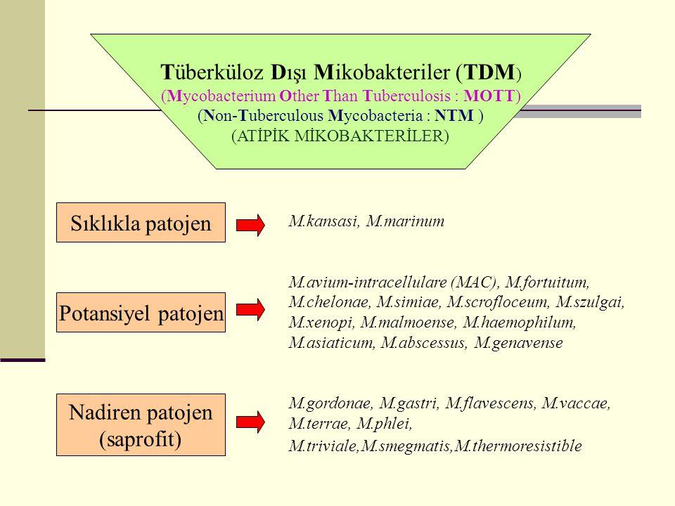 Tüberküloz Dışı Mikobakteriler (TDM ) (Mycobacterium Other Than Tuberculosis : MOTT) (Non-Tuberculous Mycobacteria : NTM ) (ATİPİK MİKOBAKTERİLER) Sıklıkla patojen Potansiyel patojen Nadiren patojen (saprofit) M.kansasi, M.marinum M.avium-intracellulare (MAC), M.fortuitum, M.chelonae, M.simiae, M.scrofloceum, M.szulgai, M.xenopi, M.malmoense, M.haemophilum, M.asiaticum, M.abscessus, M.genavense M.gordonae, M.gastri, M.flavescens, M.vaccae, M.terrae, M.phlei, M.triviale,M.smegmatis,M.thermoresistible