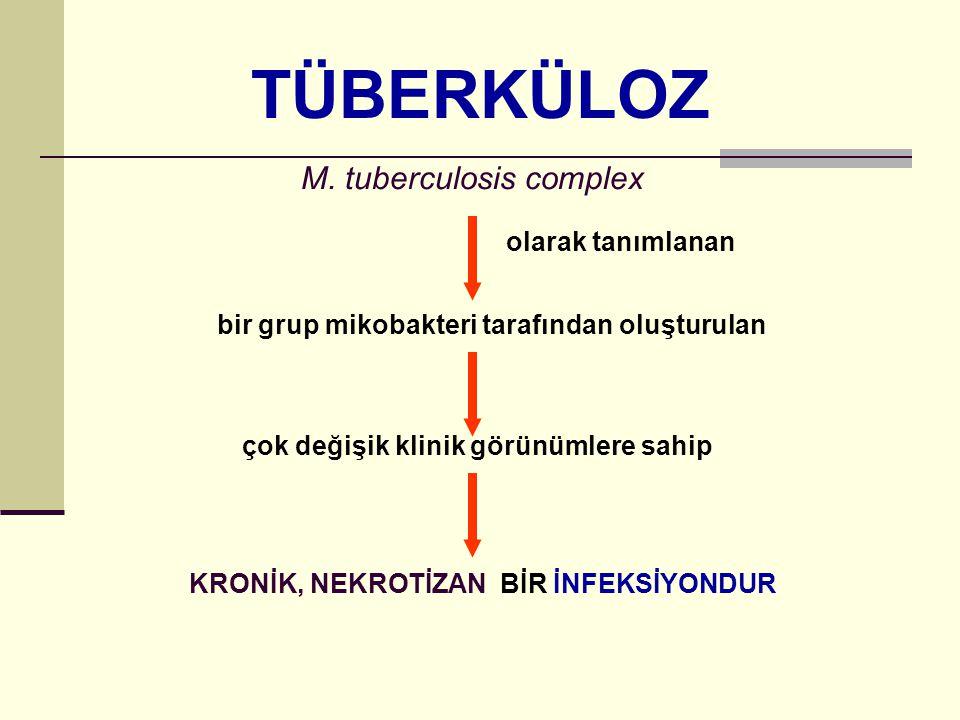 TÜBERKÜLOZ M.