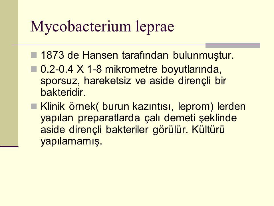 Mycobacterium leprae 1873 de Hansen tarafından bulunmuştur.